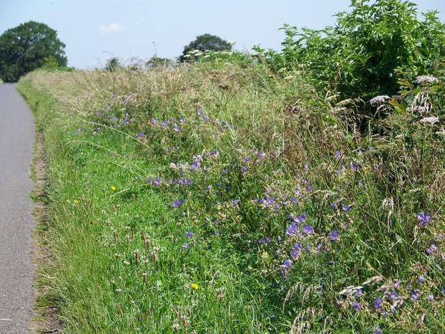 Roadside_verge_near_Alderton_ _geograph