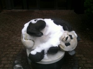 A  panda in the snow?