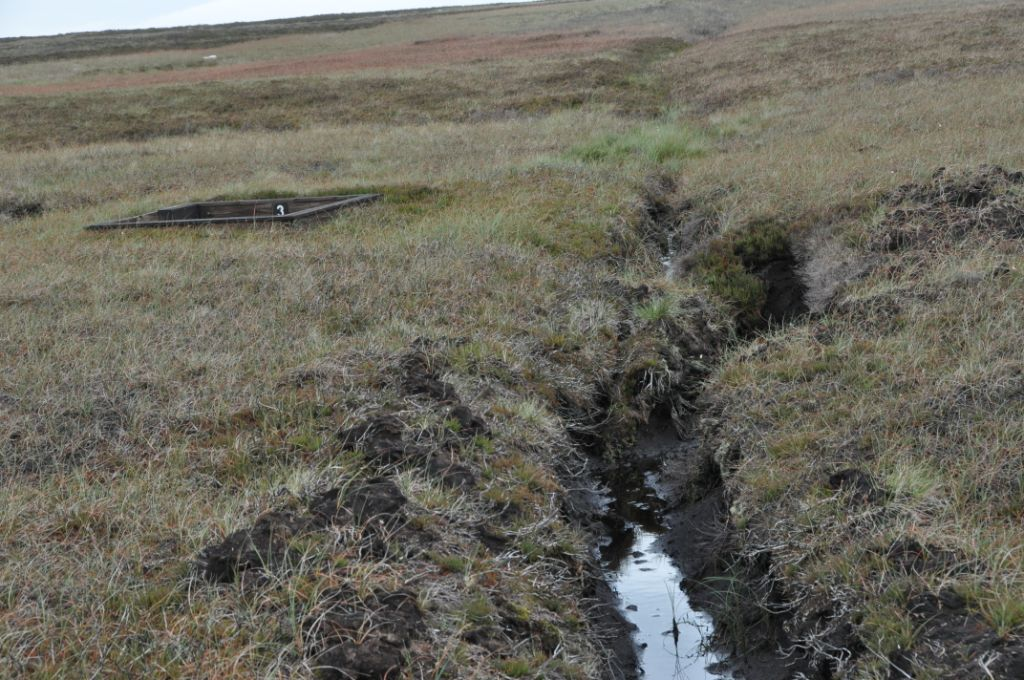 A moorland grip (drainage channel) adjacent to a sunken grouse butt.