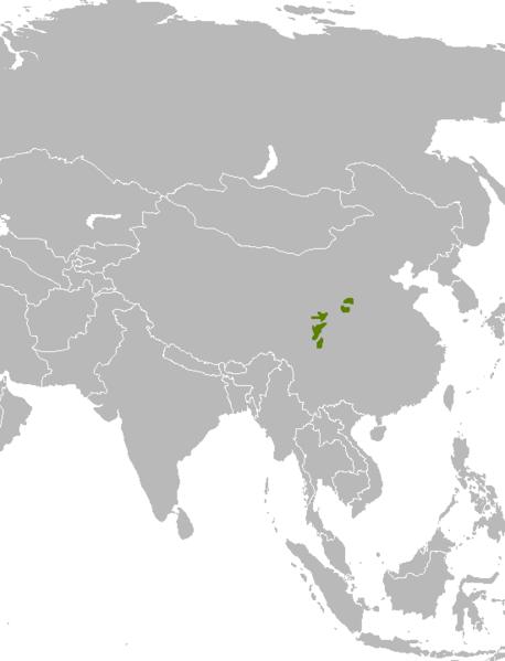 Panda Verbreitung