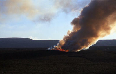 Heather burning. Photo: Paul Adams via wikimedia commons.