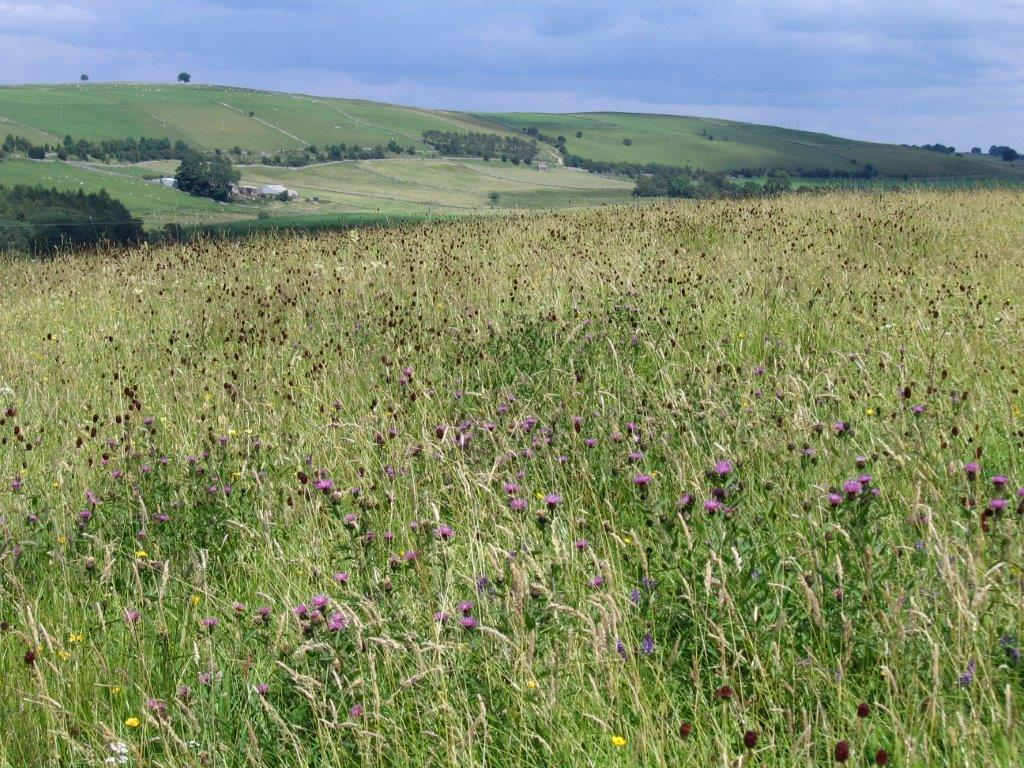 Upland wildlife-rich grassland, Cumbria. Photo: Cumbria Wildlife Trust