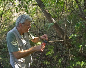 LIPU UK Secretary David Lingard dismantling snares in Sardinia