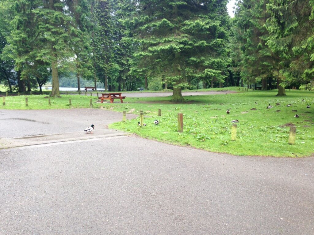 A small part of the car park - with ducks
