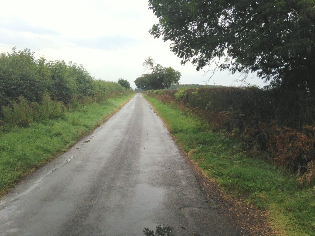 Photo 1: on the LHS of the road the hedge looks almost completely fine, on the RHS it is very sparse, stick-like and with no growth of the hedge itself.