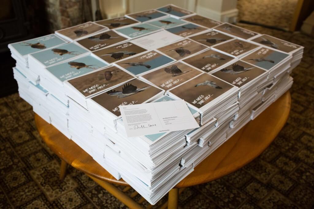 Postcards - Hen Harrier campaign 2