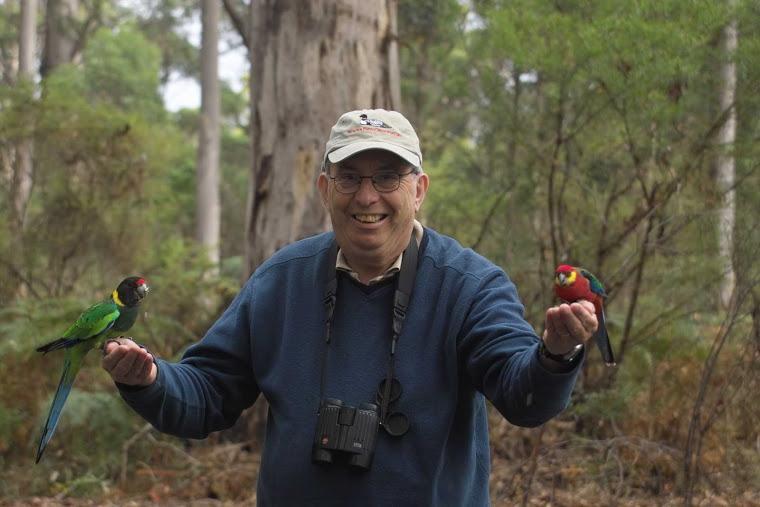 Birdbrain and birds 6
