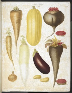 A_selection_of_vegetables,_including_aubergine,_onion,_carrot,_and_potato_-_Album_Vilmorin_(1850),_plate_6_-_BL