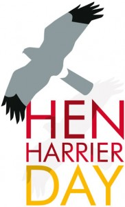 Hen-Harrier-Day-300px