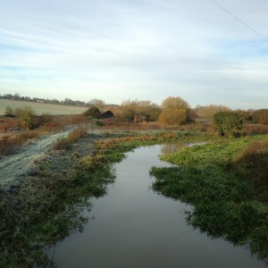 I was hearing the chack-chack! of Fieldfares and watching fish rise to the surface from the Black Bridge