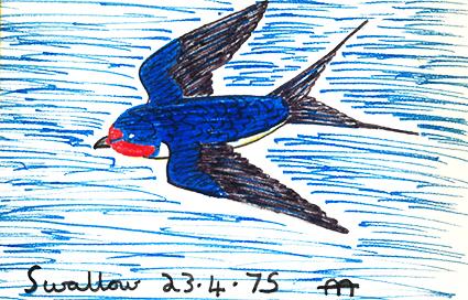 swallow_23_4_75