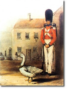 coldstreamgoose