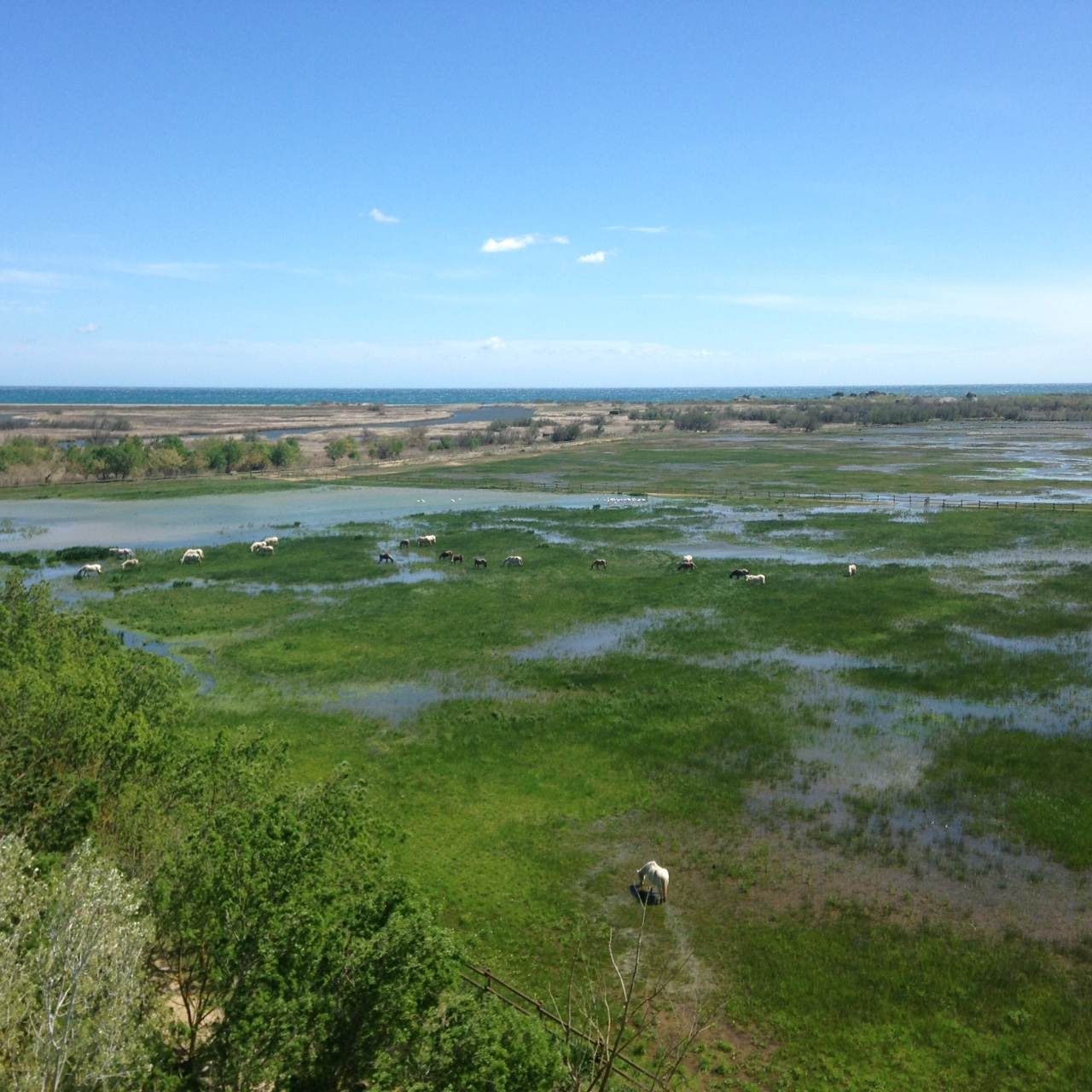 A wetland with Garganey, Whiskered and Gull-billed Tern and lots of waders (although to be fair - this was in Spain not France)