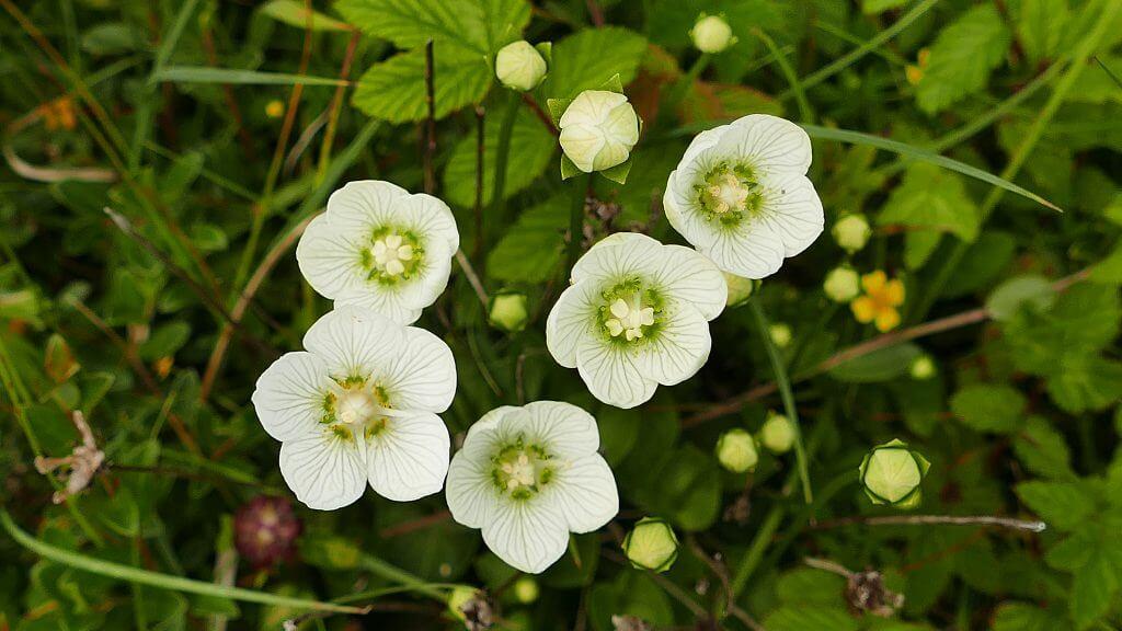 Wild flowers at Coul Links. photo: Mark Foxwell/Scottish Wildlife Trust