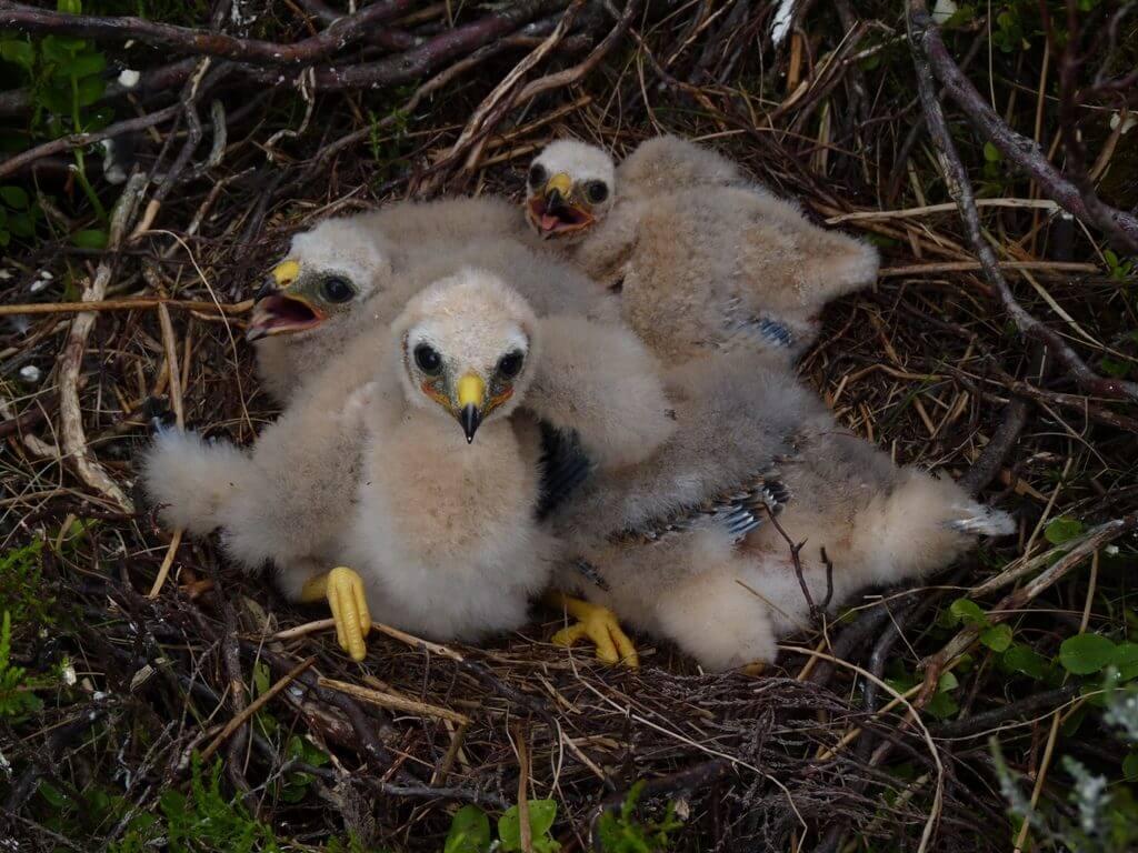 ecotricity-hh-nest